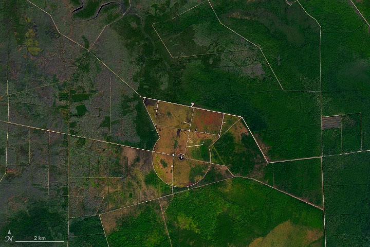 A Peninsula of Pocosin