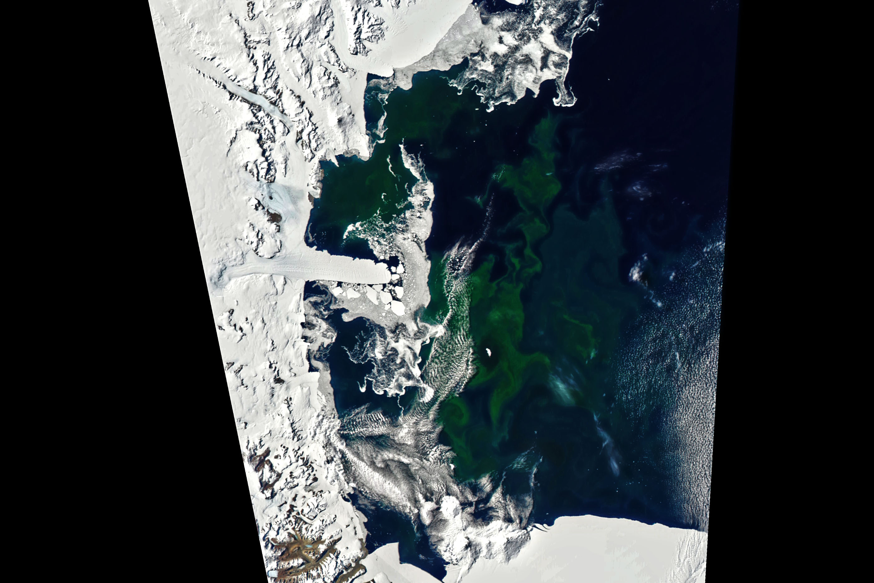 Bloom in McMurdo Sound - related image preview
