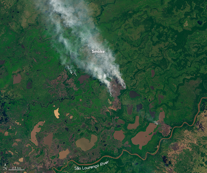 Fire in the Pantanal - related image preview