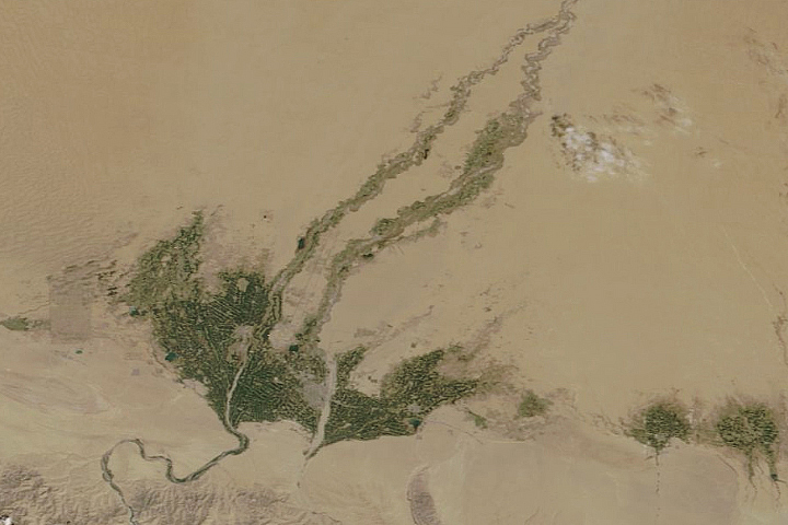 Spring Greening in the Taklamakan Desert