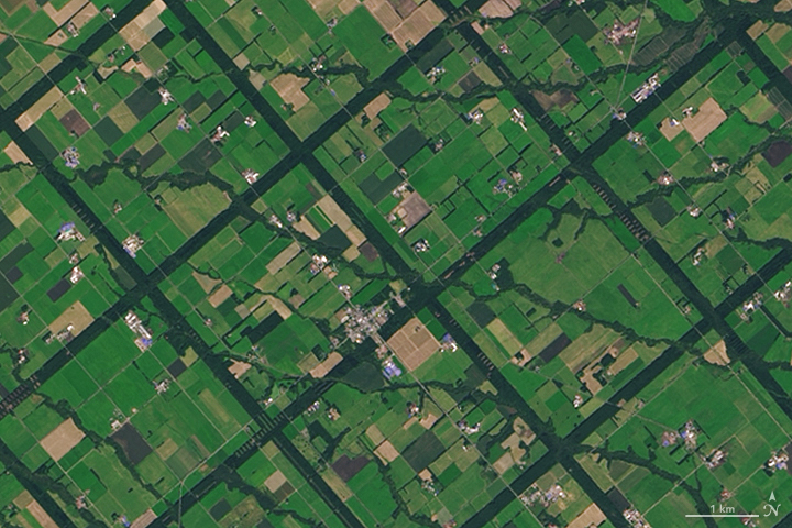 A Windbreak Grid in Hokkaido