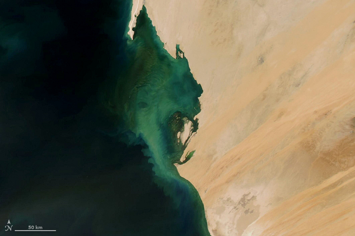 Perma-Blooms off Mauritania - related image preview