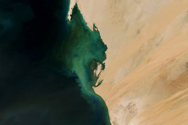 Perma-Blooms off Mauritania - selected image
