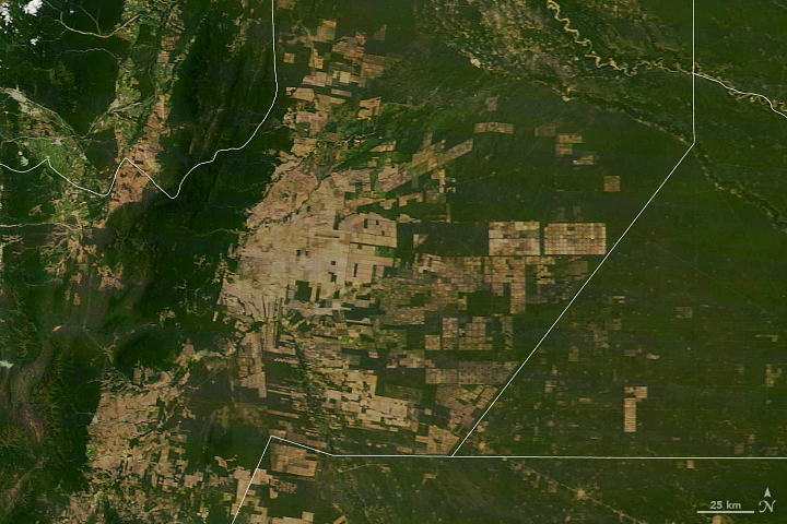 Deforestation in Argentina's Gran Chaco - related image preview