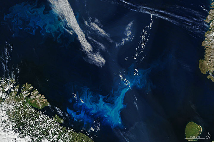 Phytoplankton Surge in Arctic Waters - related image preview