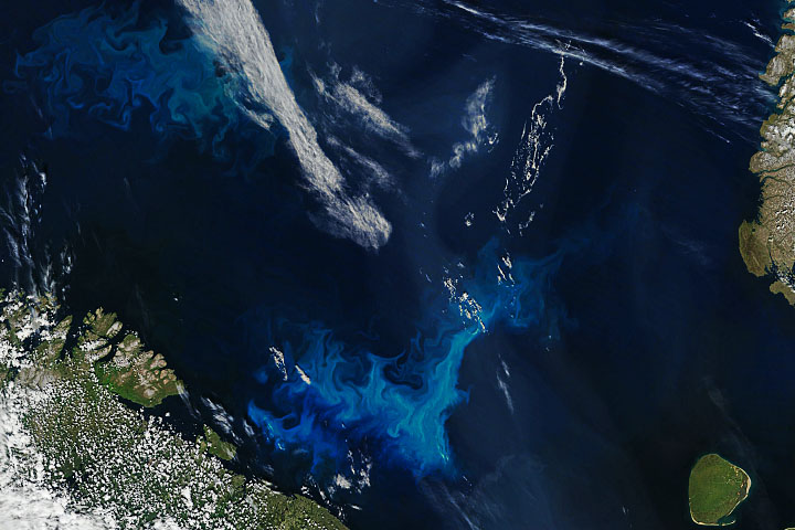 Phytoplankton Surge in Arctic Waters - selected image