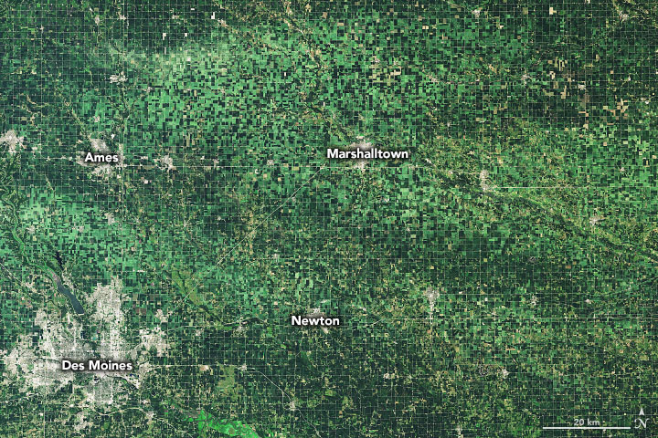 Derecho Flattens Iowa Corn - related image preview