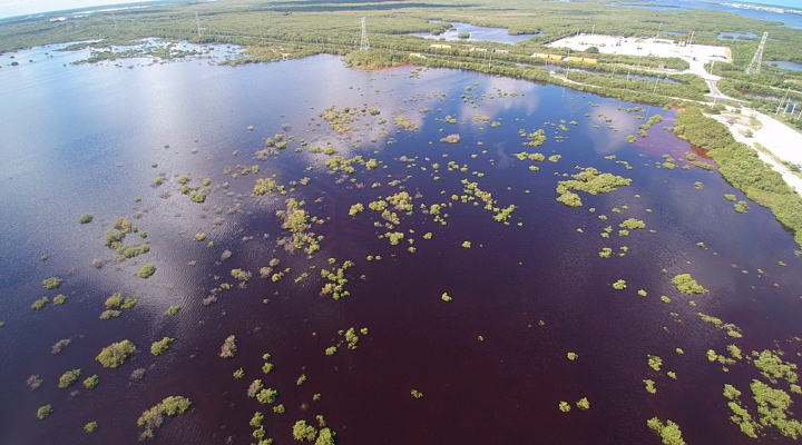 2020 Hurricanes Damage Vulnerable Mangroves - related image preview