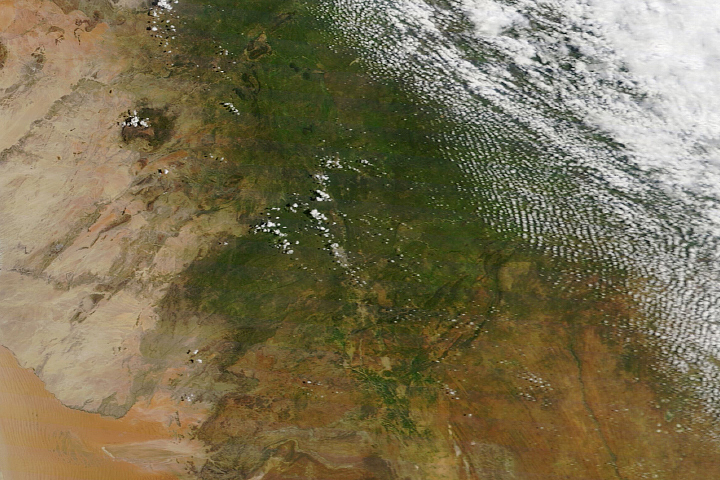 Abundant Rain Turns Namibia Green - selected image