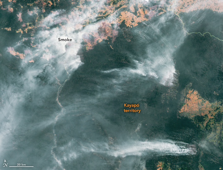 Fires Raged in the Amazon Again in 2020 - related image preview