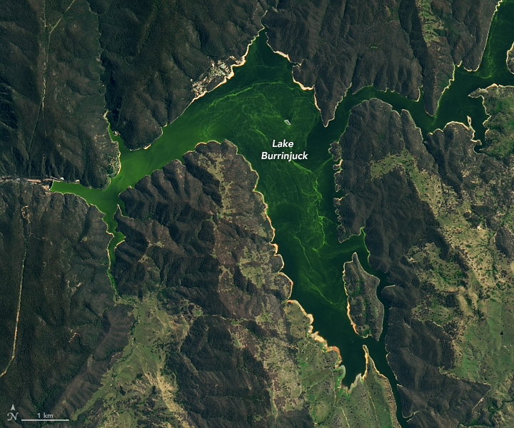 Blue-green Algae at Lake Burrinjuck - related image preview