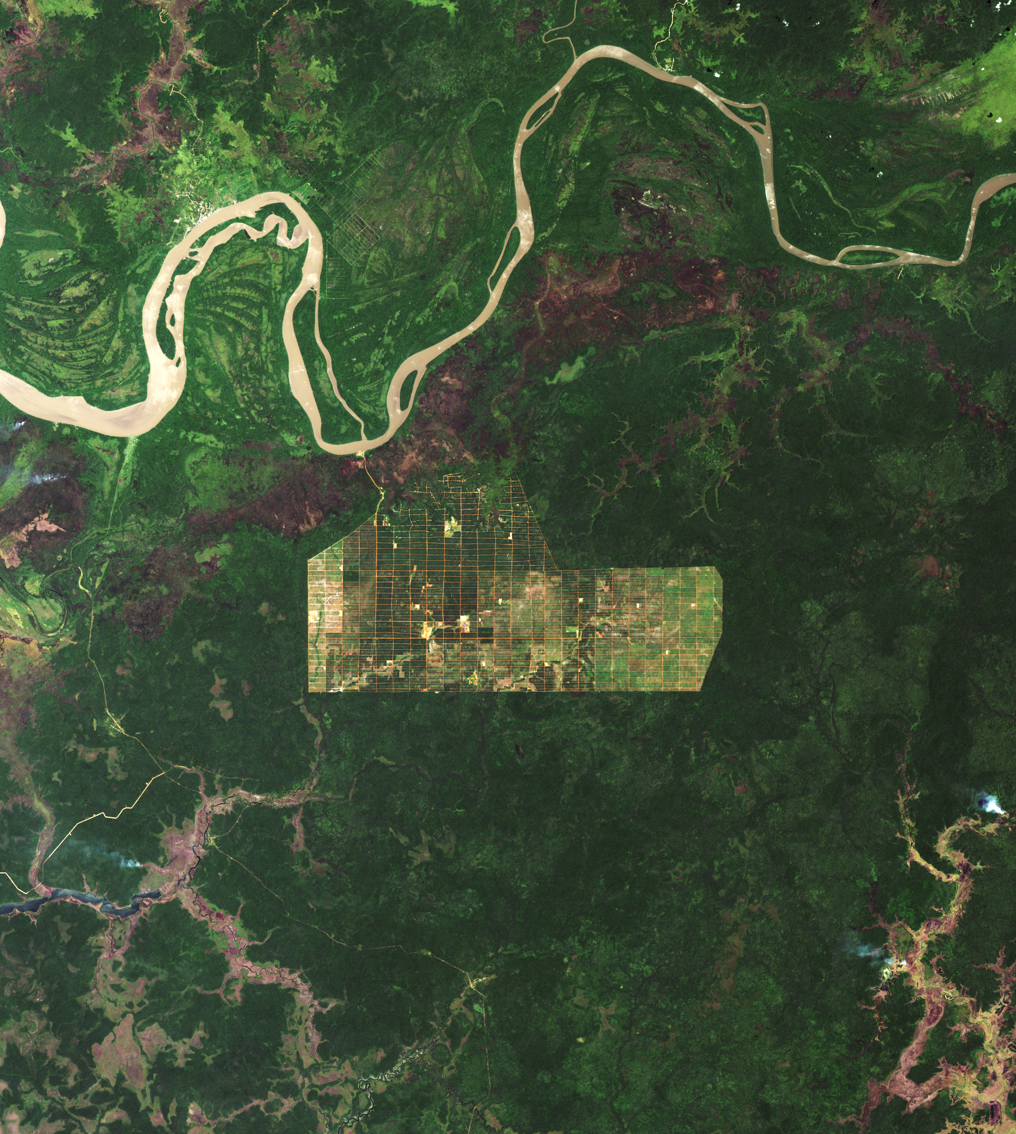 Deforestation in Papua - related image preview