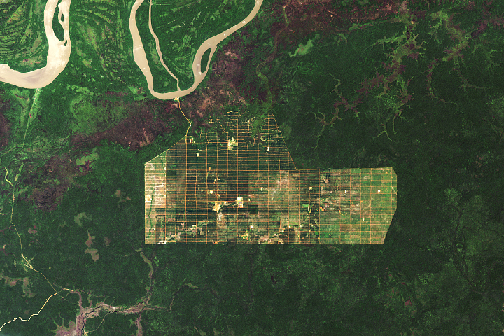 Deforestation in Papua