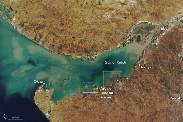 Kutch's Coral Reefs - related image preview