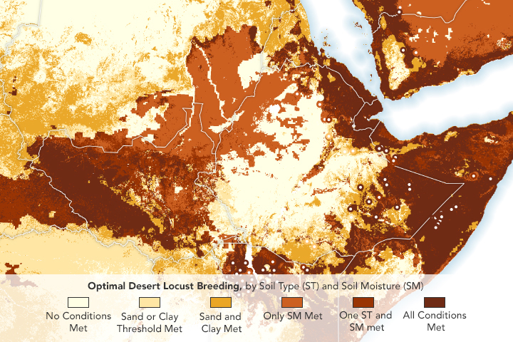 Soil Data Aids Prediction of Locust Swarms - related image preview