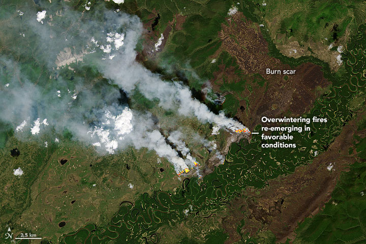 Overwintering Fires on the Rise - related image preview