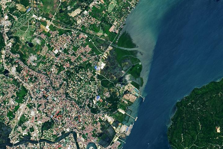 Mangroves Regrow in Iloilo City