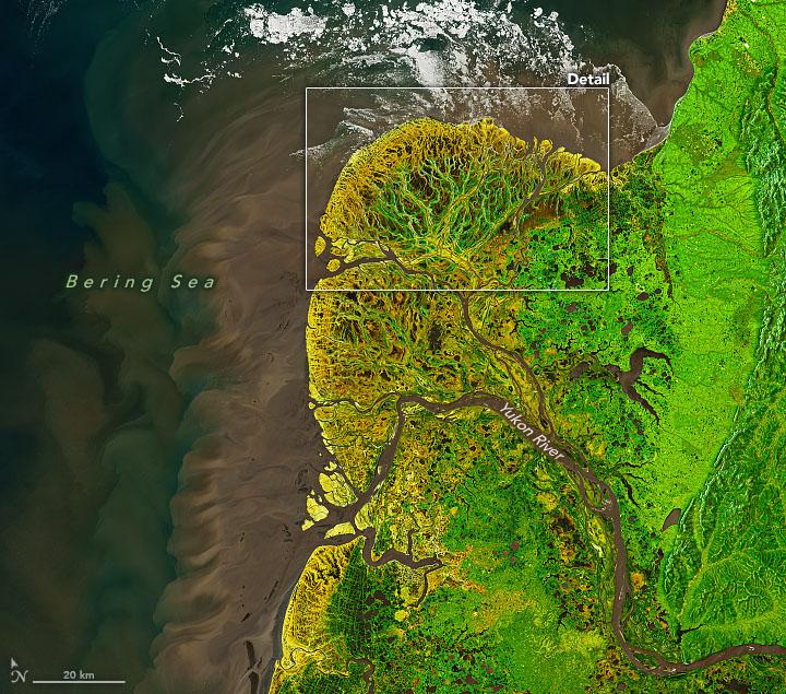 Yukon-Kuskokwim in Colorful Transition