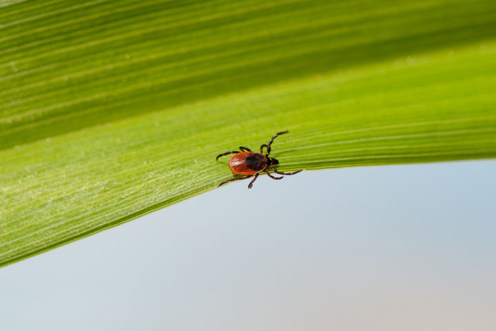 Mapping the Spread of Lyme Disease - related image preview