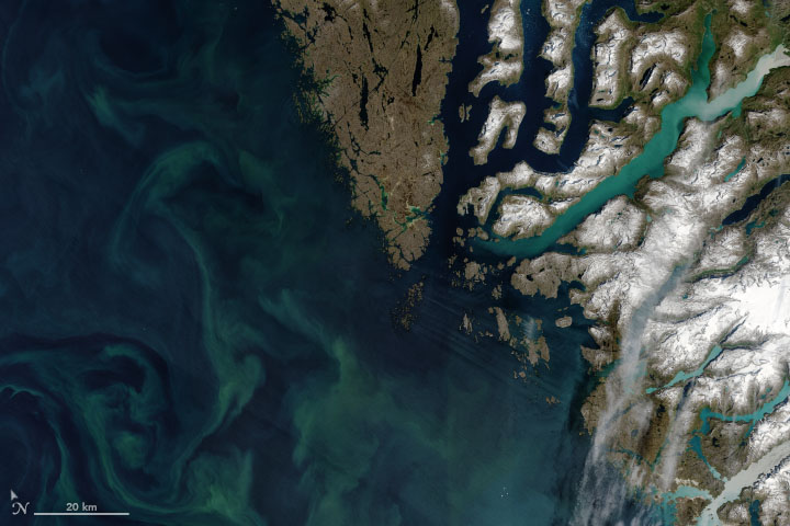 Autotrophs Abound in Arctic Waters - related image preview