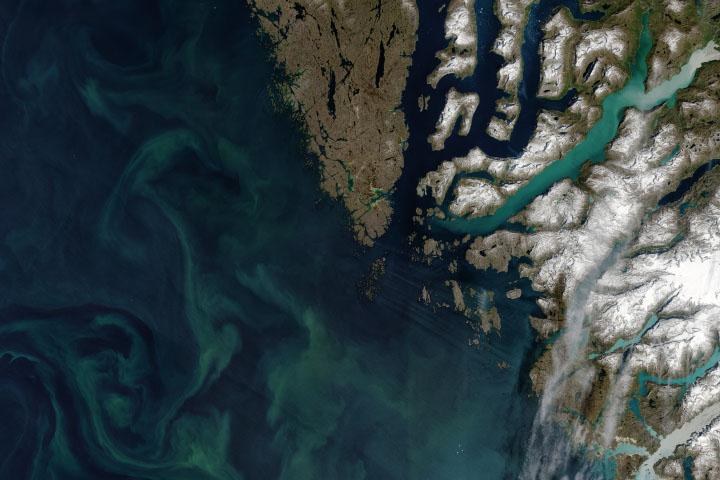 Autotrophs Abound in Arctic Waters