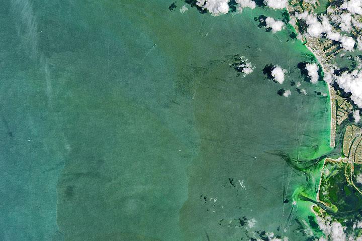 Algae Abound Along Florida Coast