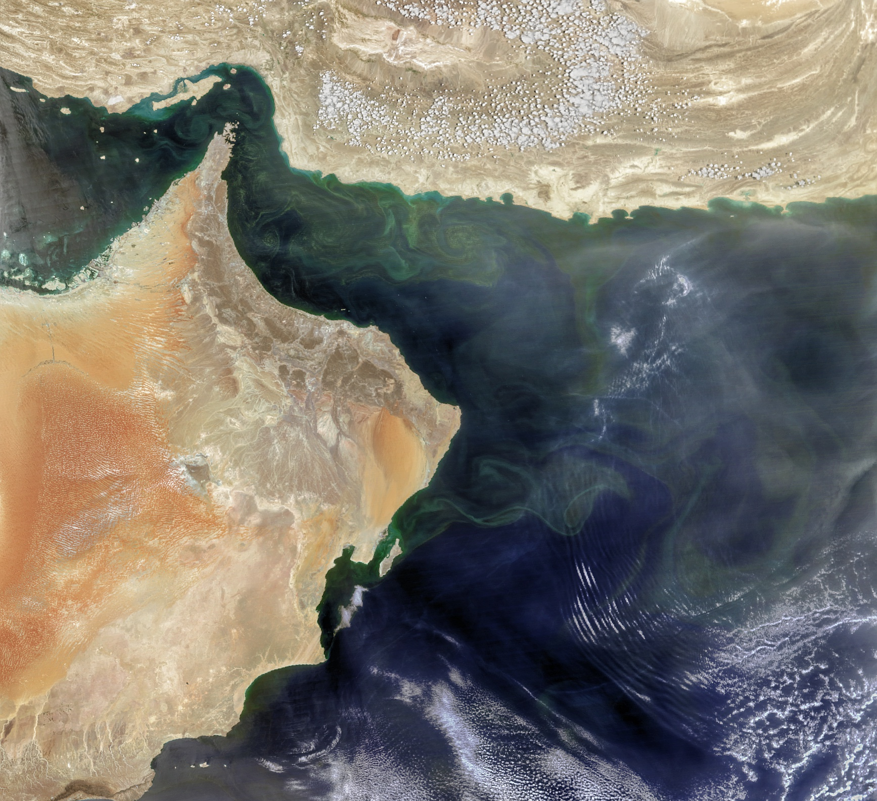 An Upended Ecosystem in the Arabian Sea - related image preview