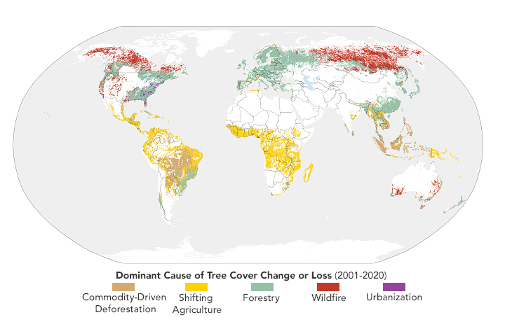 Sizing Up How Agriculture Connects to Deforestation - related image preview