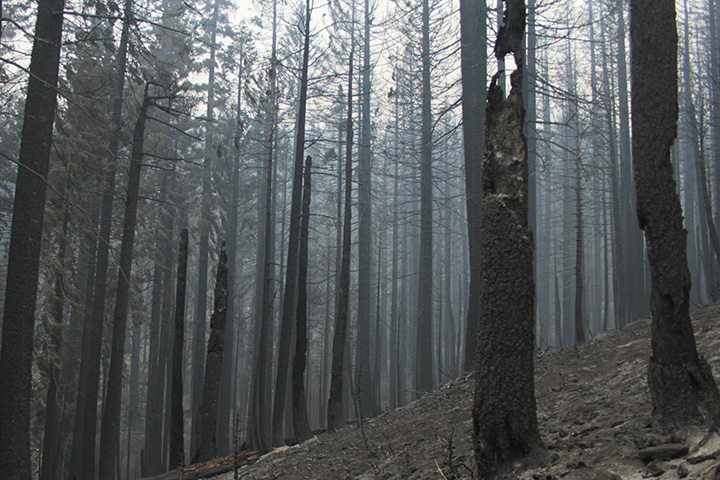 What's Behind California's Surge of Large Fires? - related image preview