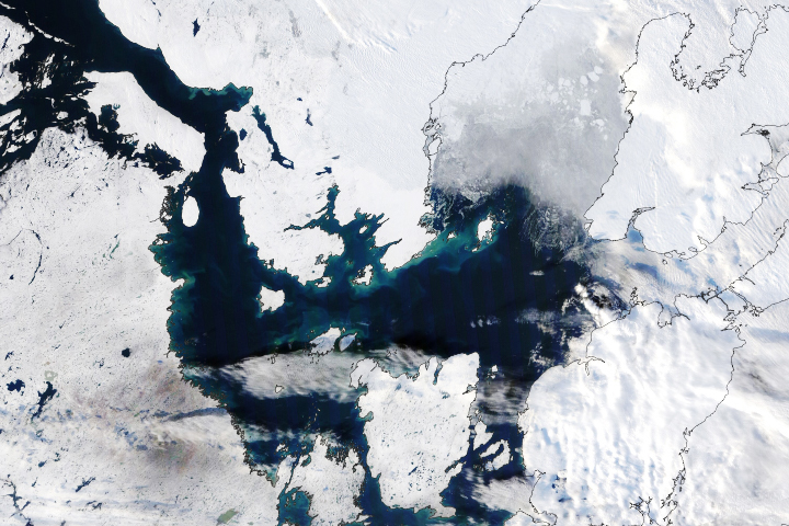 Late Bloomers in the Arctic