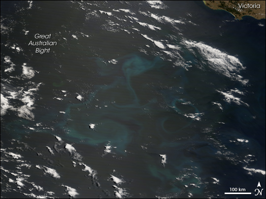 Phytoplankton Bloom in the Great Australian Bight