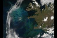 North Atlantic Bloom