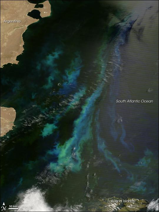 Phytoplankton off the Coast of Argentina