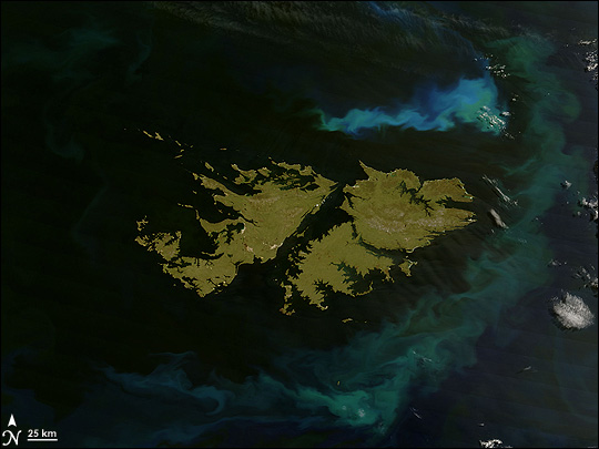 Phytoplankton surround the Falkland Islands