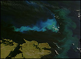 Phytoplankton surround the Falkland Islands