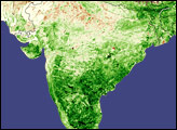 Record Crops in India - selected image