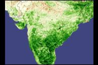 Record Crops in India