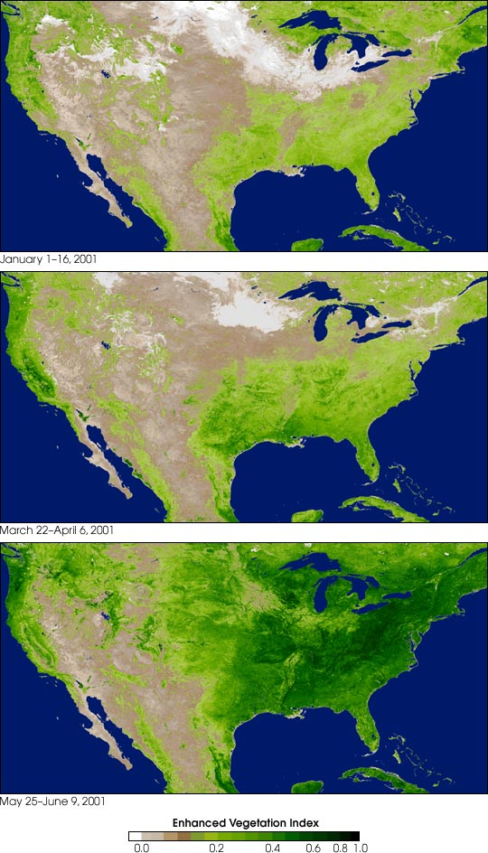 Vegetation in North America Image of the Day