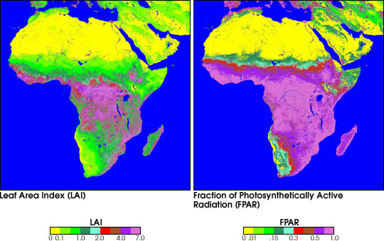 Characteristics of Vegetation in Africa