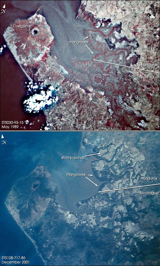 Shrimp Farms and Mangroves, Gulf of Fonseca