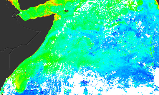 Plant Productivity in the West Indian Ocean - related image preview