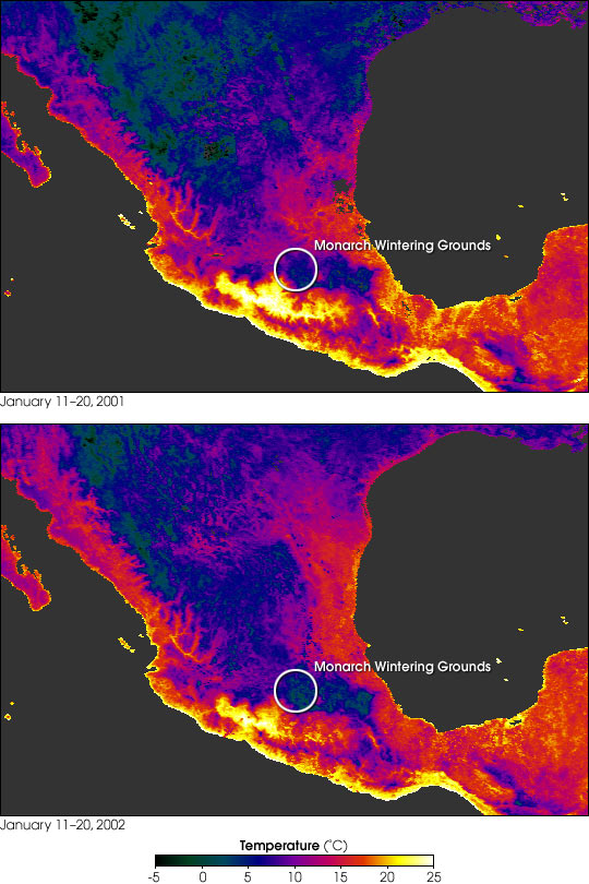 Mass Mortality of Monarchs in Mexico