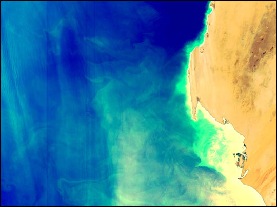 Phytoplankton off the West Coast of Africa