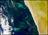 Sulfur Upwelling off the African Coast