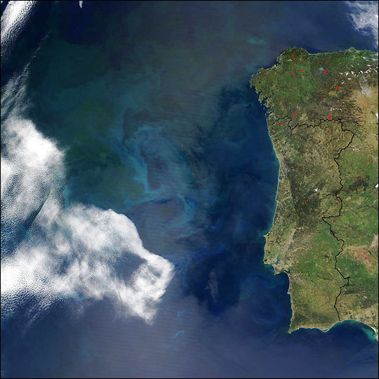 Phytoplankton off the Coast of Portugal