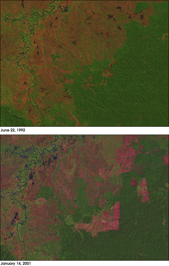 Deforestation in Sumatra