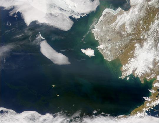 Bering Sea in Bloom