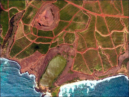 Hawaiian Coffee Plantation