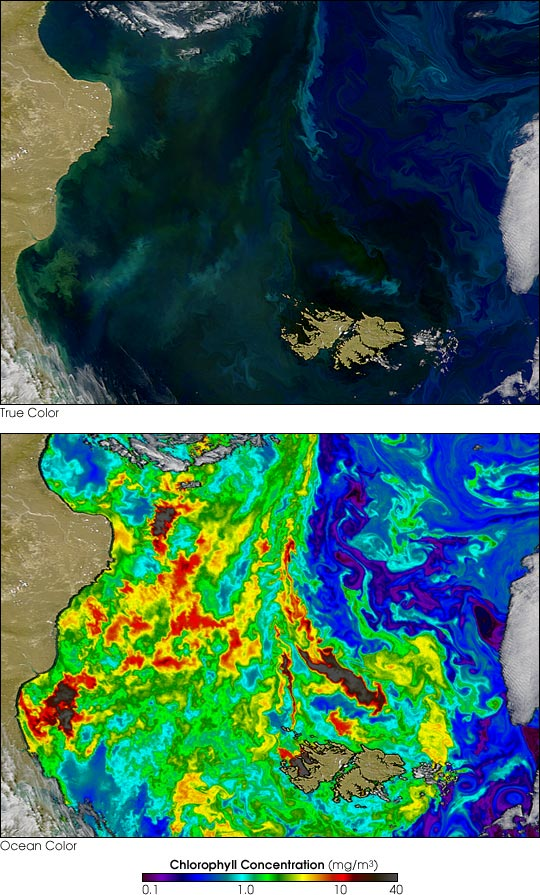 Phytoplankton Thrive around the Falkland Islands