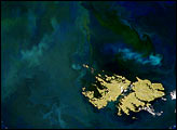 Phytoplankton Thrive around the Falkland Islands
